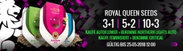 Angebot Royal Queen Seeds